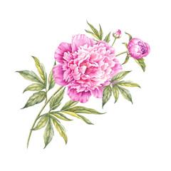 Watercolor pink peonies.