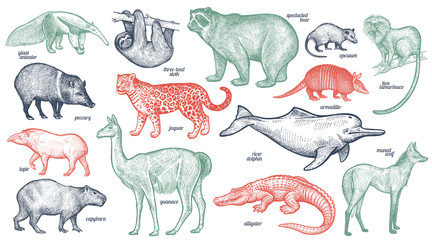 Animals of South America.