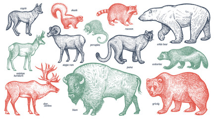 Animals of North America.