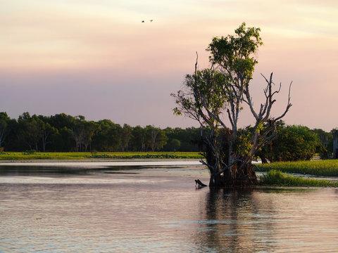 Yellow Waters wetland, Kakadu, Northern Territory, Australia