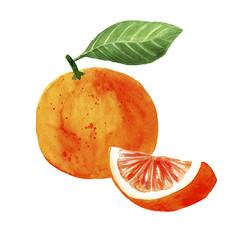 watercolor illustration of grape citrus fruit on white