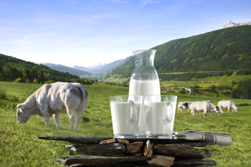 milk and cows