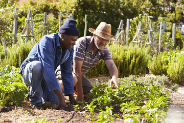 Two Men Working Together On Community Allotment Fototapete