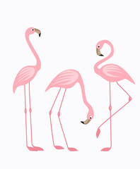 Tropical bird flamingos
