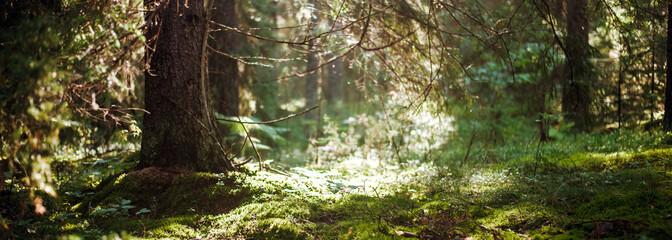 Bokeh in forest