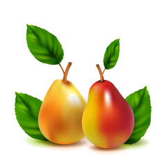 Realistic vector pears isolated on white background. Created using gradient meshes.