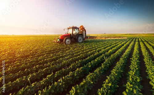 Wall mural Tractor spraying soybean field at spring