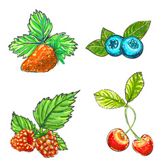 Hand drawn vector illustration set of color raspberry, blueberry, strawberry, cherry. sketch. Vector eps 8