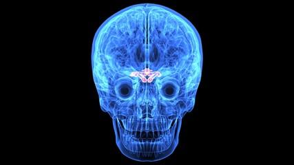 3d illustration of human body brain anatomy parts
