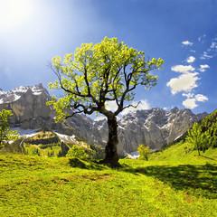 Klon w Wielkiej Maple ziemi, Karwendel
