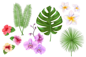 Set of exotic tropical flowers, plants, leaves. Vector illustration with realistic palm, monstera leaf, hibiscus, orchid.