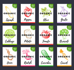 Vector organic vegetables cards set. Farm eco products tags collection. Hand sketched greens illustration