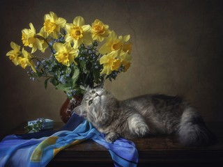 A kitten and a bouquet of yellow daffodils