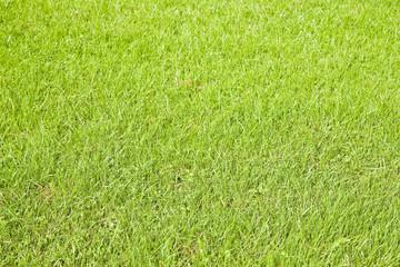 Green irish wild grass field background in summer season (Ireland)