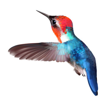 Bee Hummingbird - Mellisuga helenae. Realistic vector illustration of a flying male, the world's smallest bird with colorful iridescent plumage on transparent background.
