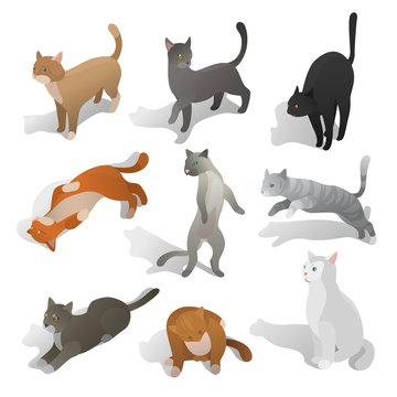 Set of isometric cats in different poses, walking, seating, jumping, sleeping. Realistic cartoon style. Collection of domestic animals in isometric. Isolated vector illustration art.