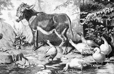 Boring company, donkey snobbing domestic geese, engraving from XIX century