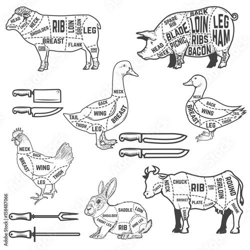 Pork diagram saddle init diagram guide for cutting meat for lamb goose pork cow rabbit rh fotolia com goat pack saddle diagram goat pack saddle diagram ccuart Choice Image