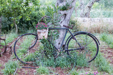 Supersano, Italy - May 24, 2017: Old bicycle in a cultivated field