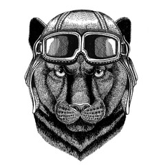 Panther Puma Cougar Wild cat wearing leather helmet Aviator, biker, motorcycle Hand drawn illustration for tattoo, emblem, badge, logo, patch