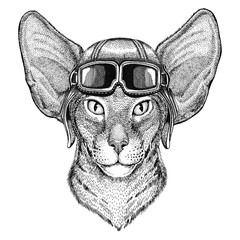 Oriental cat with big ears wearing leather helmet Aviator, biker, motorcycle Hand drawn illustration for tattoo, emblem, badge, logo, patch