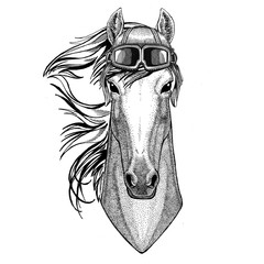 Horse, hoss, knight, steed, courser wearing leather helmet Aviator, biker, motorcycle Hand drawn illustration for tattoo, emblem, badge, logo, patch