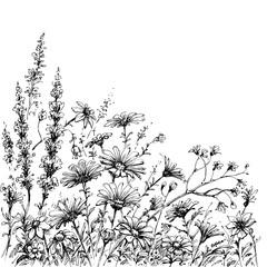 Fototapete - Field flowers sketch