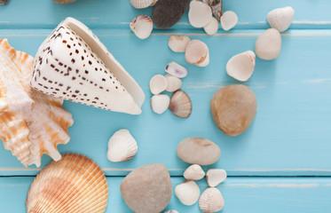 Seashells on blue wood, sea vacation background