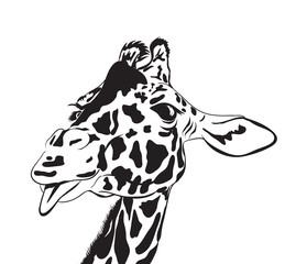 giraffe head. vector