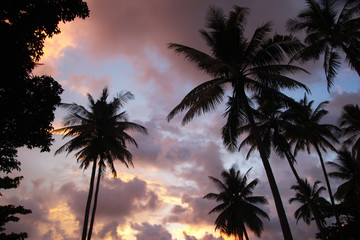 Travel to island Koh Lanta, Thailand. The colorful sky with palms tree at the sunset.
