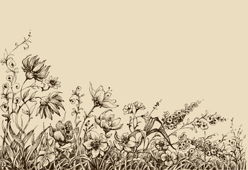 Wall Mural - Field flowers border drawing