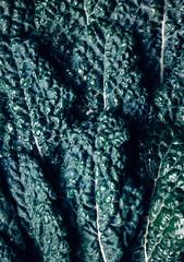 Raw kale leaves, full frame