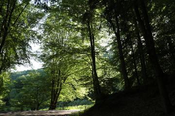 Der Weg aus dem dunklen Wald