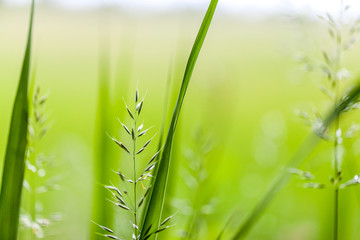 fresh green gras background