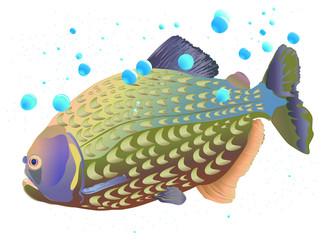Piranha Fish Underwater