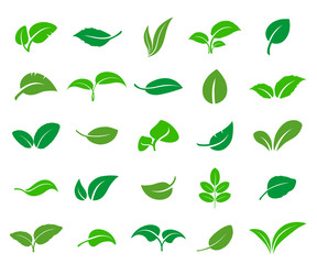 A set of abstract leaves of various trees and plants. Vector icon.