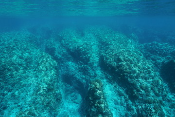 Underwater landscape rocky ocean floor coral reef, Pacific ocean ,Huahine, French Polynesia