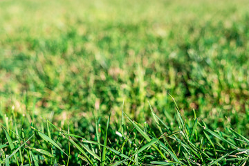 Background. Texture of green grass on the whole frame. Horizontal frame