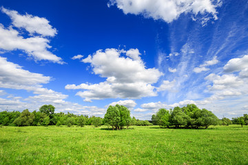 Fototapete - green field with trees and blue sky with clouds Sunny day, beautiful rural landscape