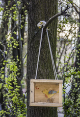 A birdhouse with a chalk drawing yellow bird hanging on a tree on the background of forest