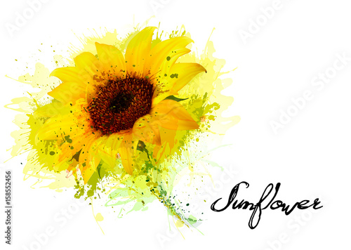 Fototapete Nature background with yellow sunflower. Vector