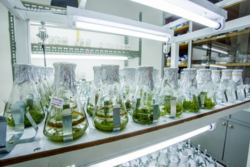 Shaker or rotator plant growth experiments done in the laboratory of plant tissue. Wall mural