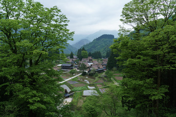 新緑の五箇山