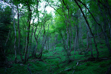 forest_clearing_II