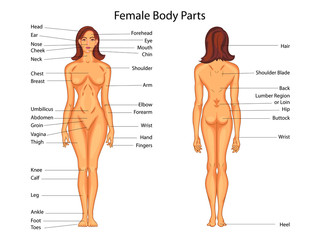 Medical Education Chart of Biology for Female Body Parts Diagram
