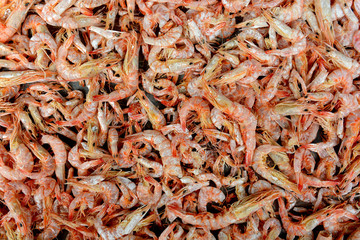 A lots of small shrimp as a background