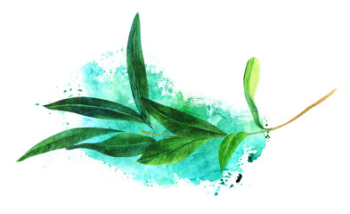 Watercolor drawing of green olive branch with teal texture