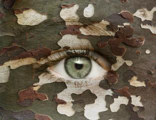 Auge mit Camouflage