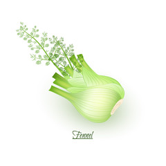Sprigs of fresh delicious  fennel in realistic style