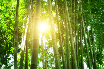 Bamboo forest in Asia Wall mural